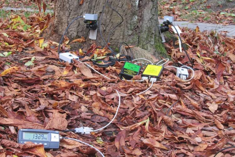 树木拉伸测试系统