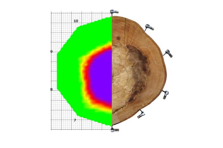 ArborSonic 3D声波断层扫描系统